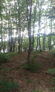 rumunsky les