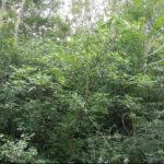 Maďarská džungle